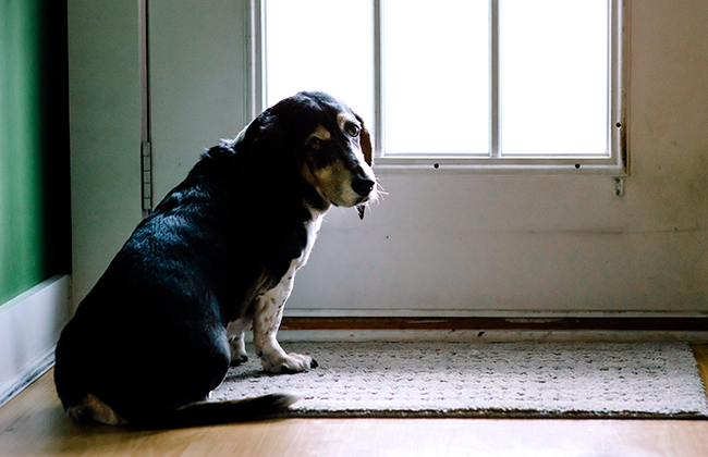 Signs of the Kingdom: A Dog at the Door