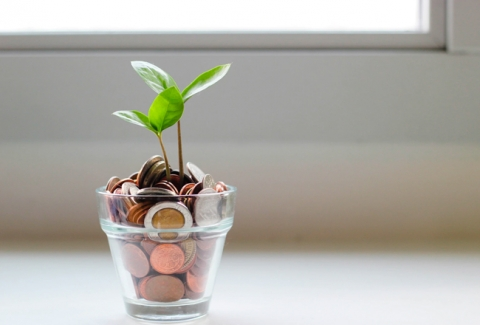 Green sprouts spring up from a small glass cup full of copper coins.